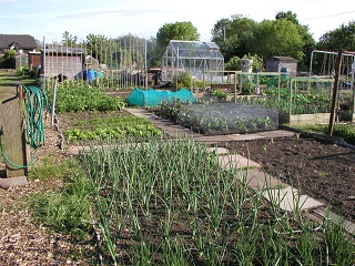 Allotment veg